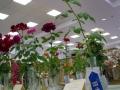 Rose Show-13