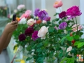 Rose Show-6