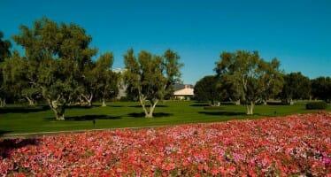 Sunnylands Olive Harvest