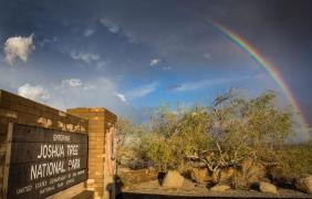 Coachella Valley Photo of the Day – Joshua Tree