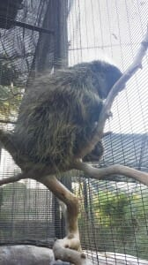 North American Porcupine at The Living Desert