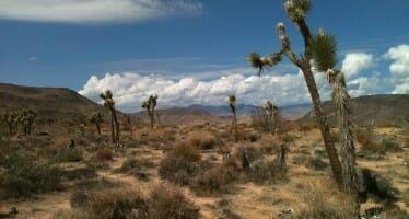 Coachella Valley Spotlight on Local Amateur Photographer – Lisa Avlarez Johnson