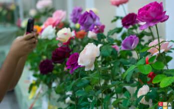 27th Annual Rose Show Palm Desert Highlights