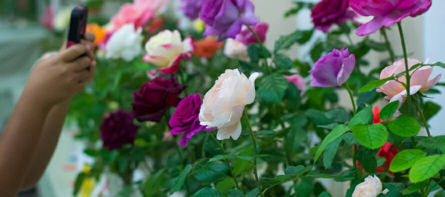 27th Annual Rose Show Palm Desert Highlights