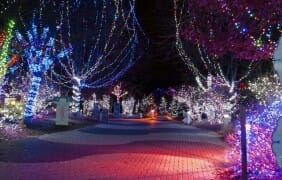 Nearly 1 Million WildLights at The Living Desert