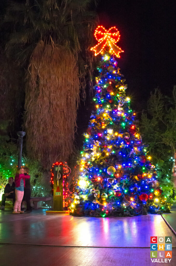 The Living Desert Christmas Tree
