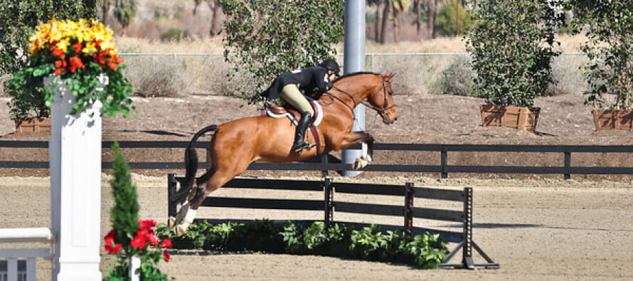HITS Horse Show in Thermal