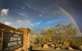Joshua Tree National Park Sees Record Visitation in 2014
