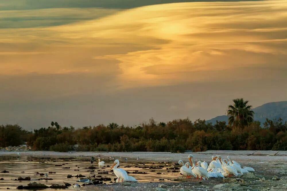 Salton Sea by Ann McKinnell