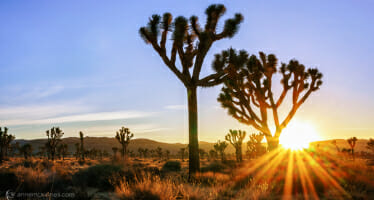 Coachella Valley Daytrippen – Joshua Tree National Park Admission is FREE for 3 Day Weekend!