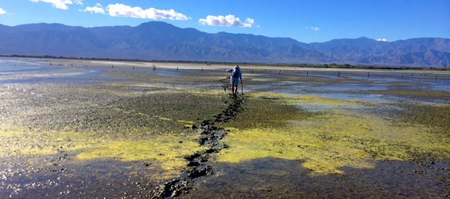 The Salton Sea Walker – man will attempt to be first ever to walk the 116 miles shoreline in just 6 days this summer