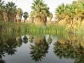 "California Desert's Thousand Palms Oasis as ""Nobody"" has ever seen it before until… NOW!"