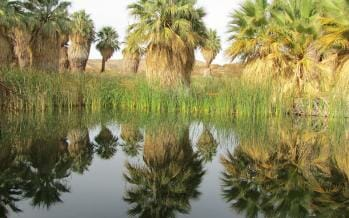 """California Desert's Thousand Palms Oasis as """"Nobody"""" has ever seen it before until… NOW!"""