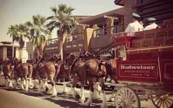 Budweiser Clydesdales returning to the Coachella Valley, your chance to catch them up close!