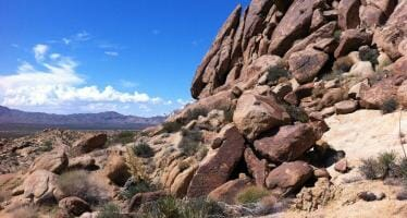Hike – Lost Palms Oasis, Joshua Tree National Park