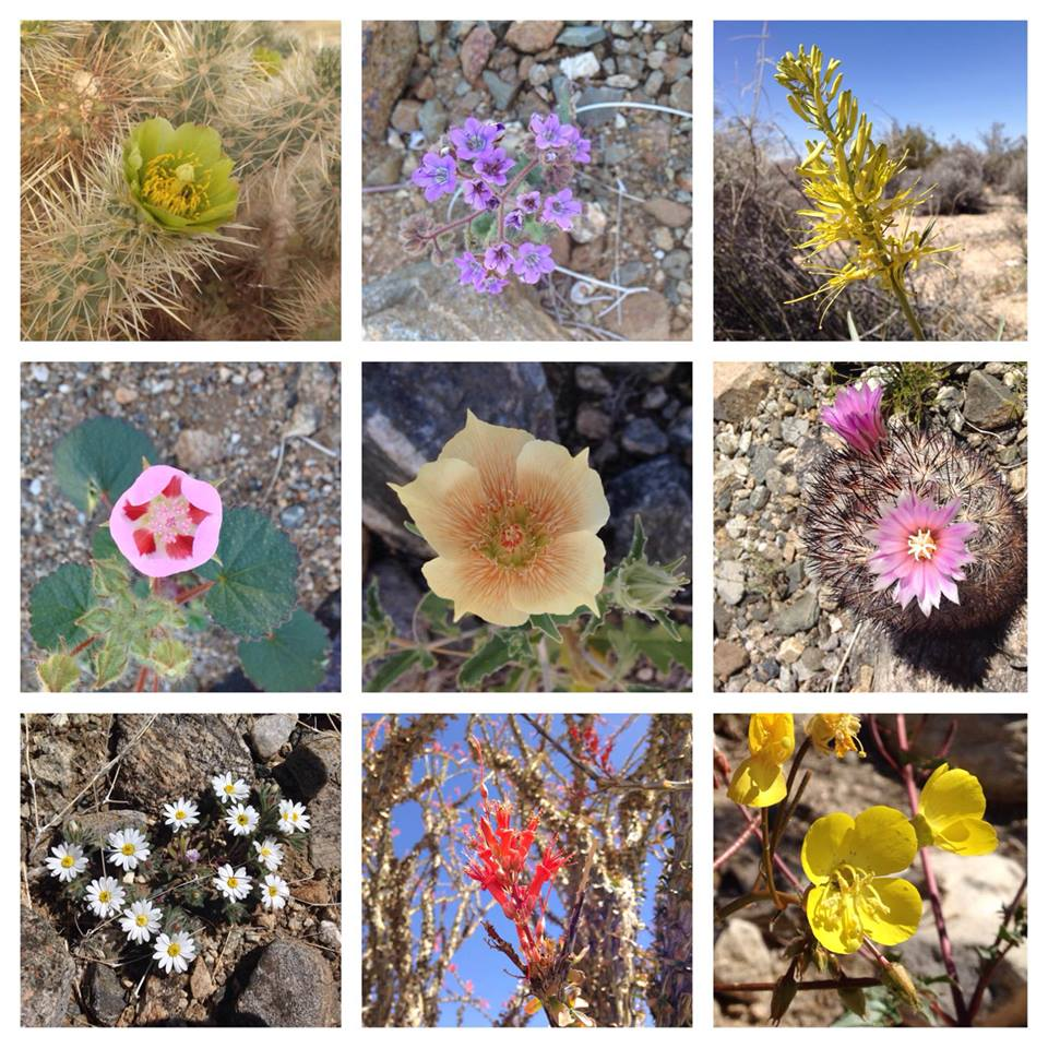 A huge variety of wildflowers are currently blooming in the park; over 40 different species are easily spotted and rare blooms.