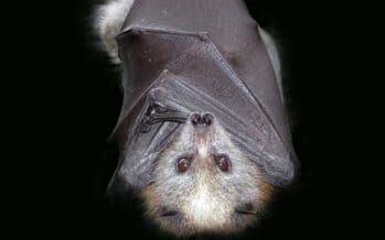 Did you know April 17 is bat appreciation day? And why not?