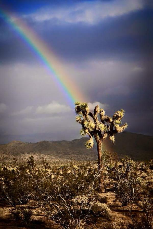 Rainbow in the Park - Joshua Tree