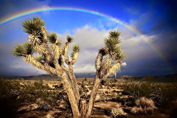 Michelle Caitlyn capturing a perfect Joshua Tree Rainbow