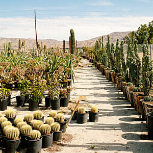 desert-escape-palm-springs-mariscal-cactus-succulents