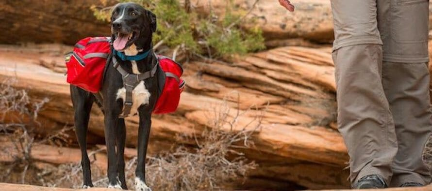 Expert Advice on Hiking or Backpacking with Your Dog