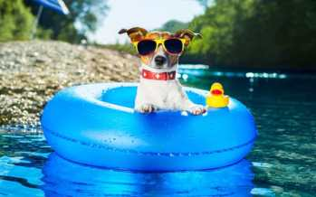 Keep Pets Safe in the Heat