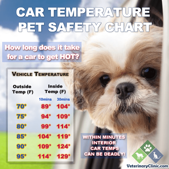 Keep Pets Safe In The Heat Coachella Valley