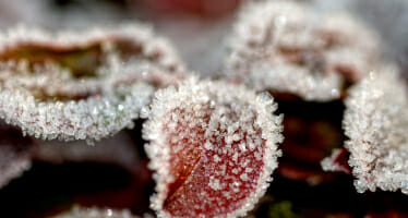 How to Protect Your Garden from Frost and Freeze