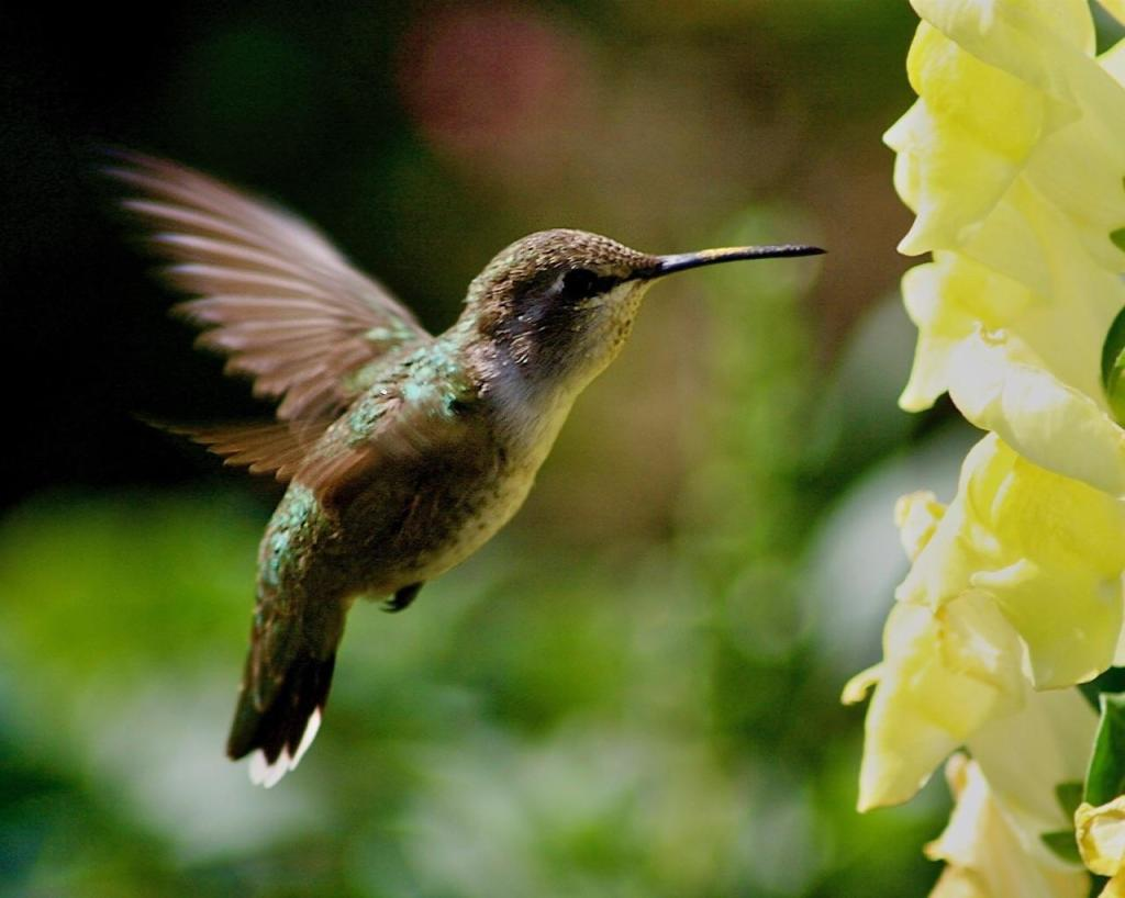 "He pulls out a stunning photo of a frozen-in-place hummingbird. He says, ""It sold right away. Maybe I'm onto something!"