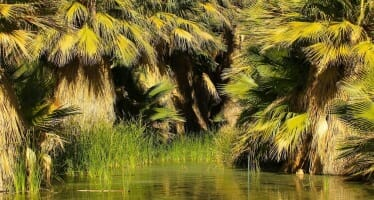 Hike The Coachella Valley Preserve