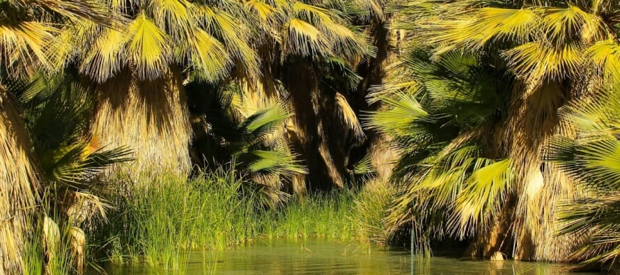 Hike The Coachella Valley Preserve