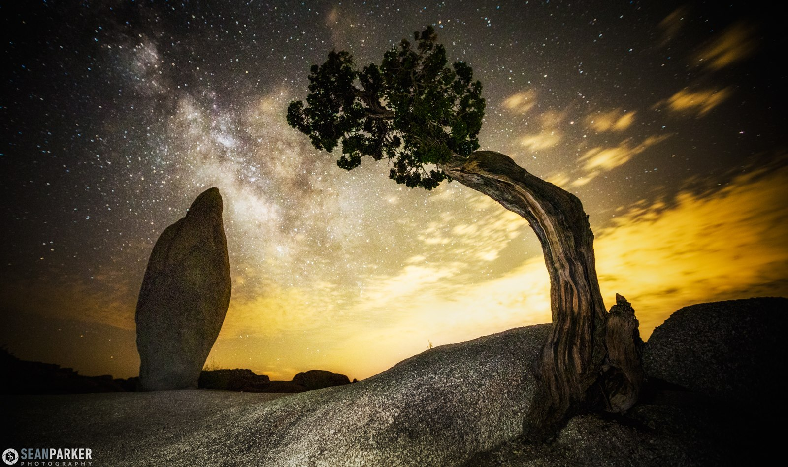 Lone Juniper and Balanced Rock by Sean Parker Photography