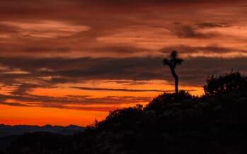 Day Hike Joshua Tree – Ryan Mountain