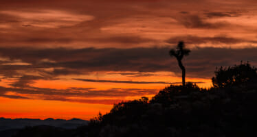 Day Hike Joshua Tree – Ryan Mountain