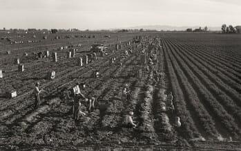 Coachella Valley Farming big business, all in a days work!