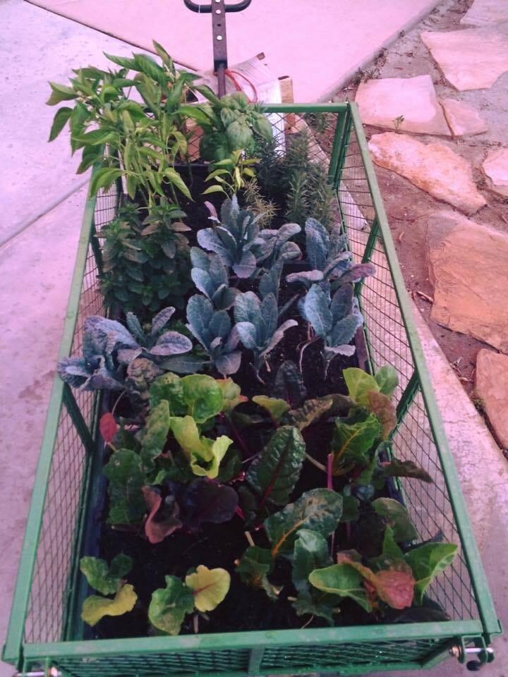 Webb's garden wagon