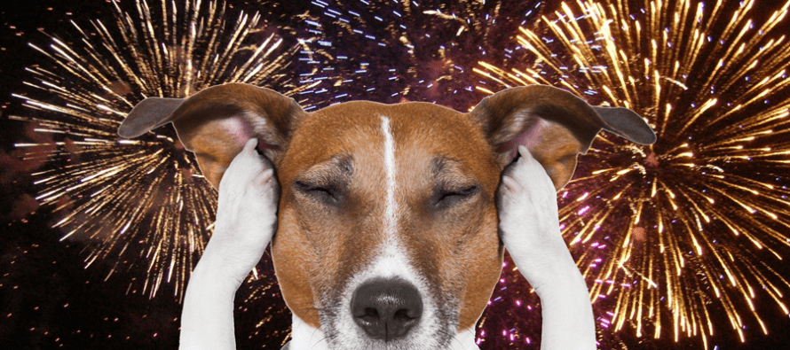 Ten Pet Safety Tips for the Fourth of July