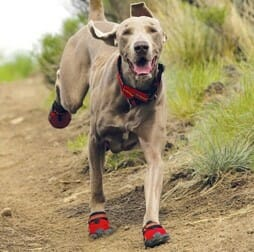Dogs have a shoe line too