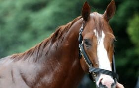 """""""Justify"""" Does it – WINS THE TRIPLE CROWN!! The three year old led wire to wire."""