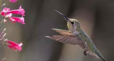 Coachella Valley wildlife Frozen in Time