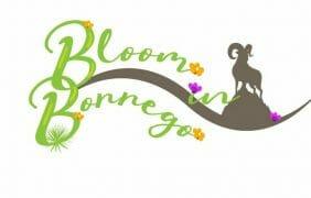 Bloom in Borrego at Borrego Days