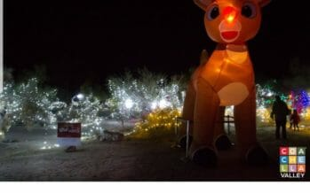 WILDLIGHTS AT THE LIVING DESERT TO SPARKLE NIGHTLY STARTING WEDNESDAY DECEMBER 19TH