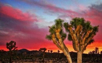 True story ?  Coachella Valley's surrounding High Desert!