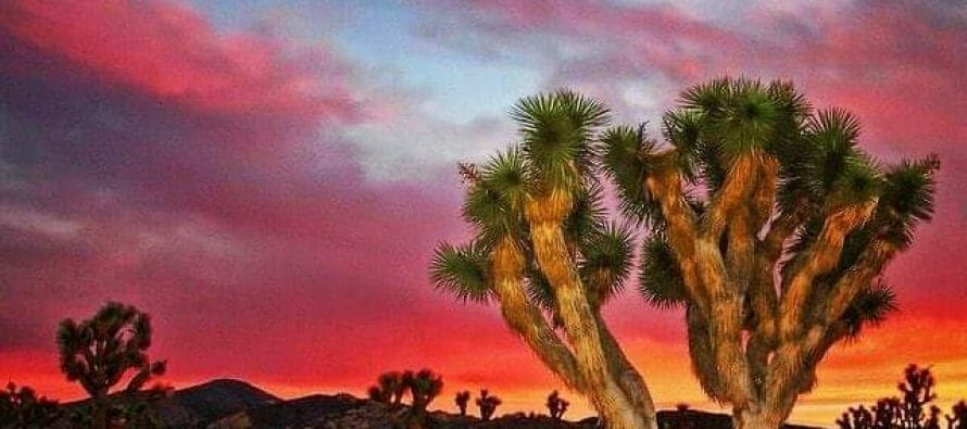 True story ?  Coachella Valley's surrounding High Desert!