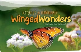 Coachella Valley's Living Desert celebrates the return of butterflies and welcomes hummingbirds