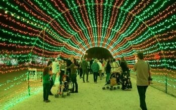 Wildlights in it's 27th year – Everything you need to know Living Desert Zoo FAQs