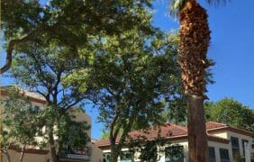 Cathedral City Public Library to Reopen October 5th