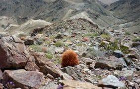 Yucaipa Man Dies Hiking In Joshua Tree National Park as Temperatures Soar