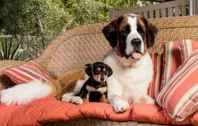 Humane Society of the Coachella Valley No Kill Shelter Survives Through Covid
