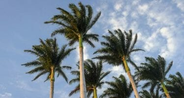 High Wind Warning until 10:00PM Saturday